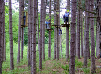 Go Ape at Delamere Forest