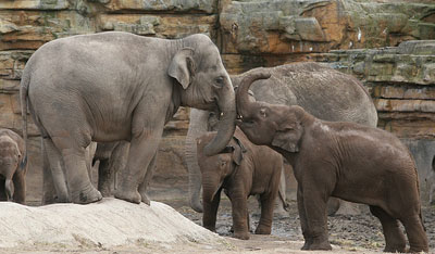 What's On At Chester Zoo